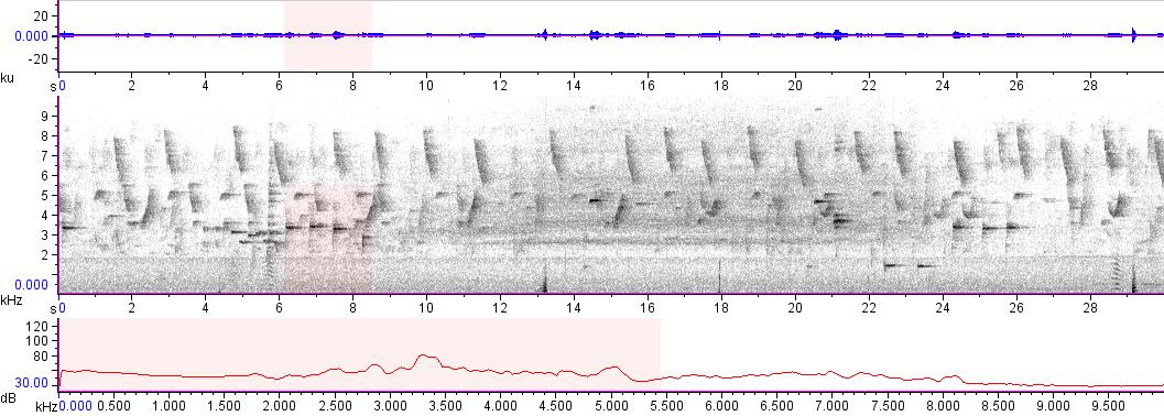 Sonogram of recording #AV 10827
