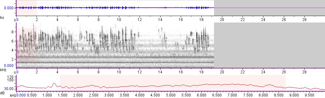 Sonogram of recording #AV 10838