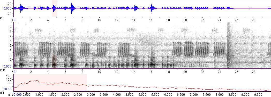 Sonogram of recording #AV 10883