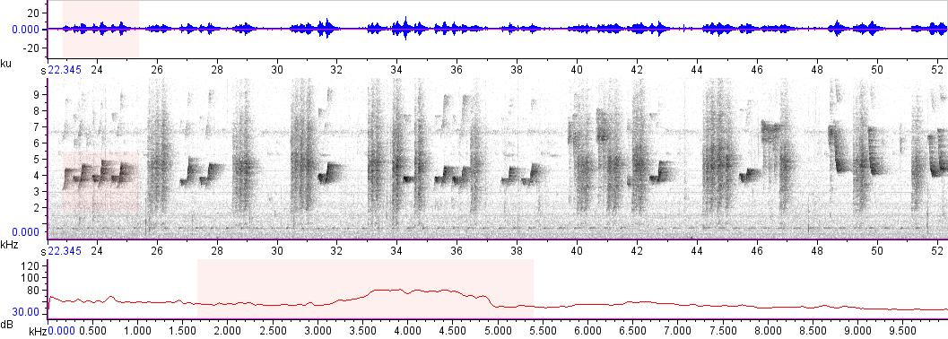 Sonogram of recording #AV 10917