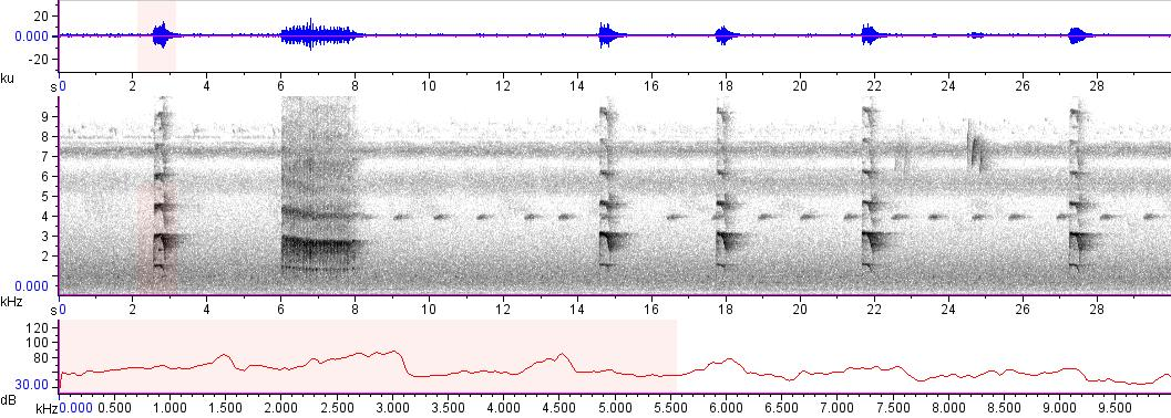 Sonogram of recording #AV 10920