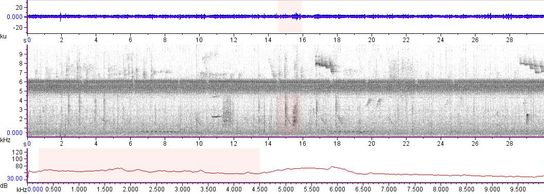 Sonogram of recording #AV 10924