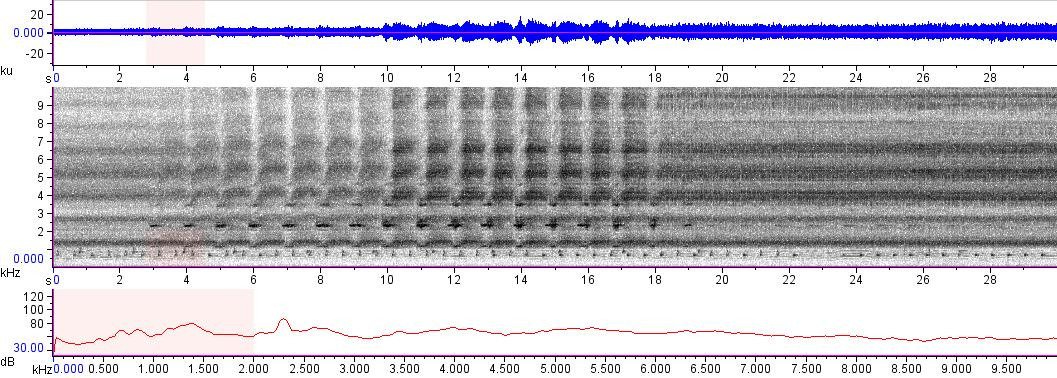 Sonogram of recording #AV 10941