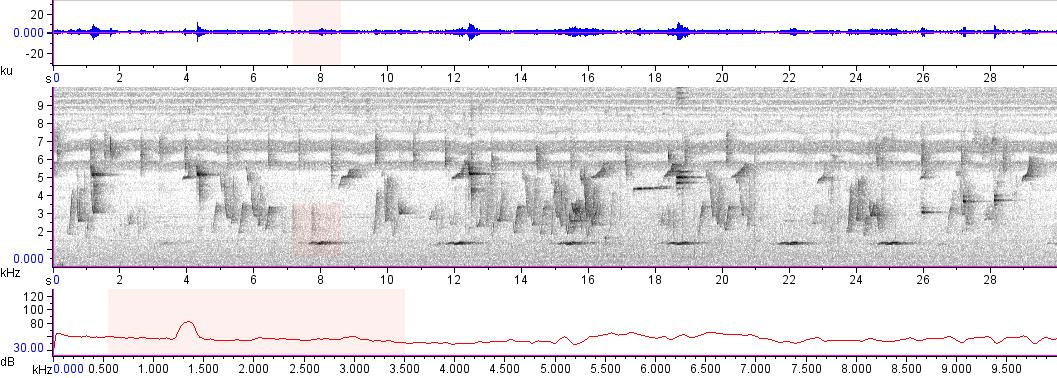 Sonogram of recording #AV 10956