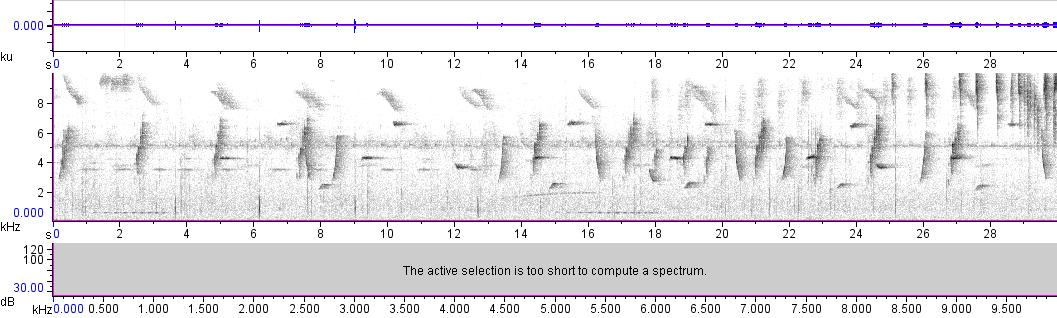 Sonogram of recording #AV 10967