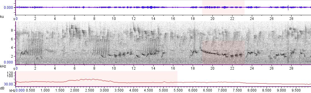 Sonogram of recording #AV 10974