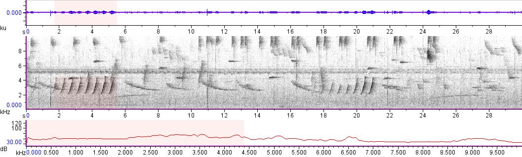 Sonogram of recording #AV 10989