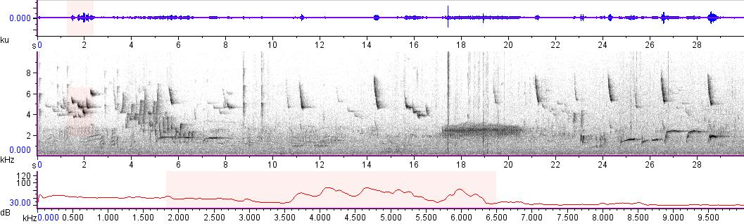 Sonogram of recording #AV 11039