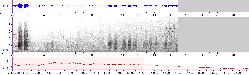 Sonogram of recording #AV 11043