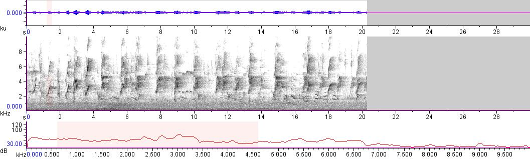 Sonogram of recording #AV 11047