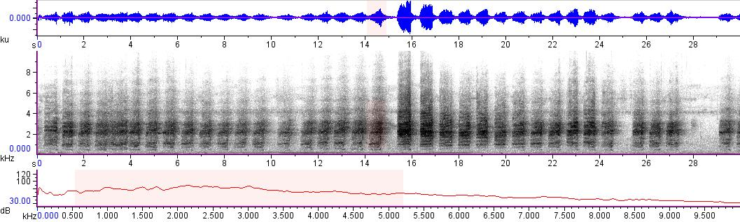 Sonogram of recording #AV 11096