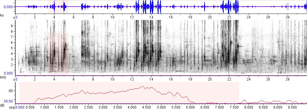 Sonogram of recording #AV 11125