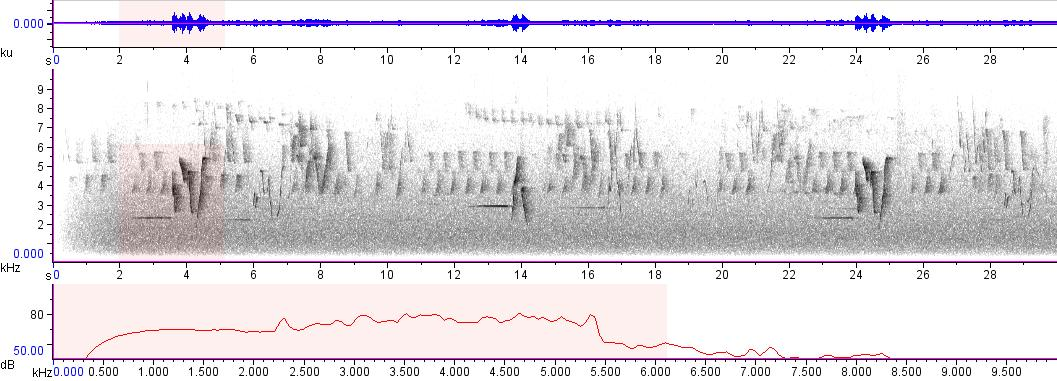 Sonogram of recording #AV 11131