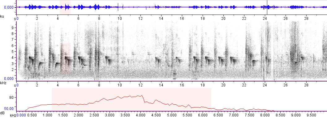 Sonogram of recording #AV 11142