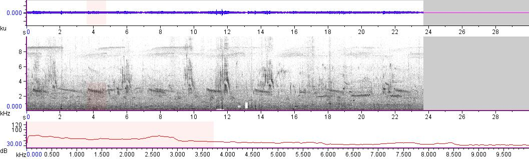 Sonogram of recording #AV 11184