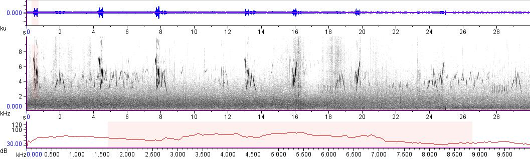 Sonogram of recording #AV 11191