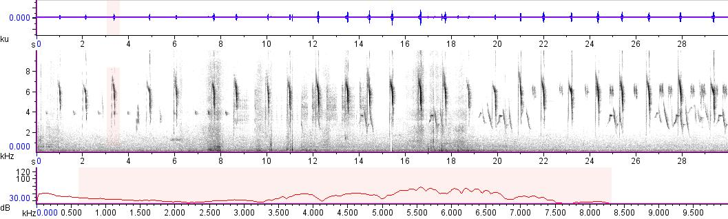 Sonogram of recording #AV 11193