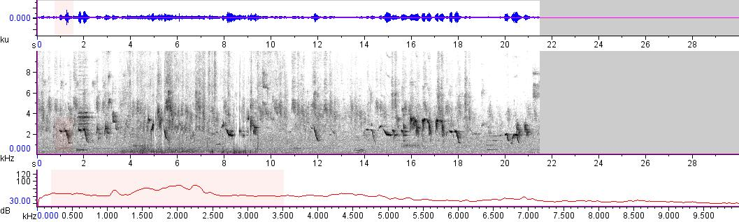 Sonogram of recording #AV 11204