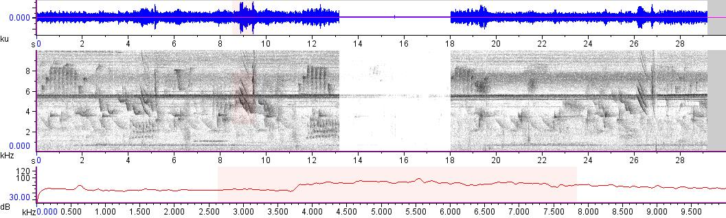 Sonogram of recording #AV 11208