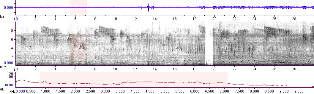 Sonogram of recording #AV 11209