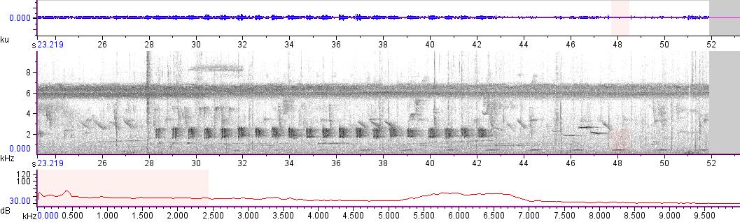 Sonogram of recording #AV 11264