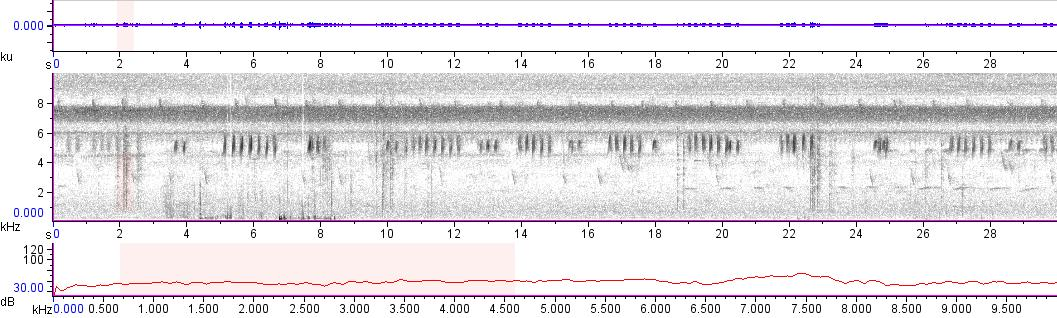 Sonogram of recording #AV 11279