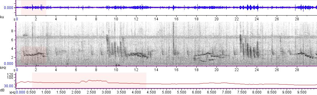 Sonogram of recording #AV 11281
