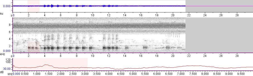 Sonogram of recording #AV 11291