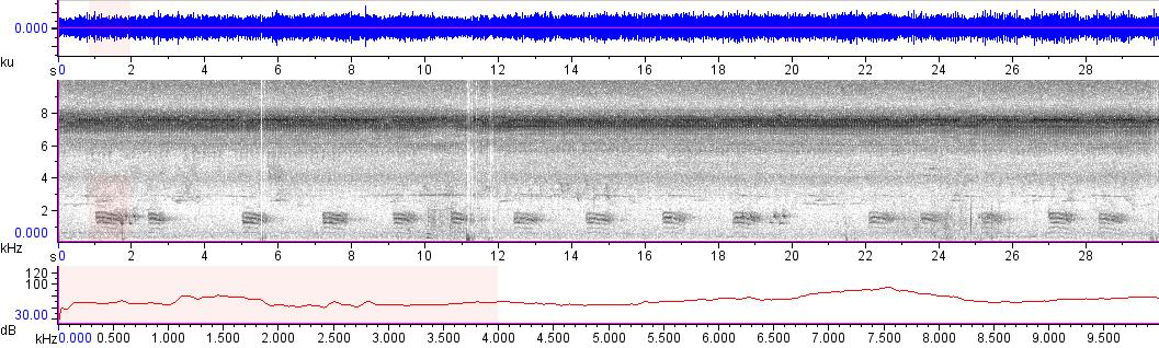 Sonogram of recording #AV 11293
