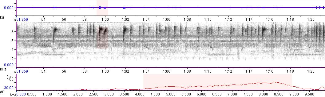 Sonogram of recording #AV 11310