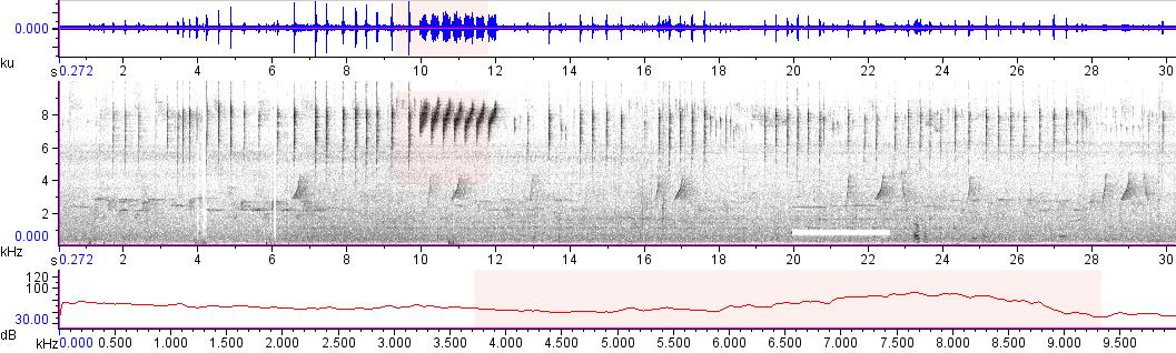 Sonogram of recording #AV 11311