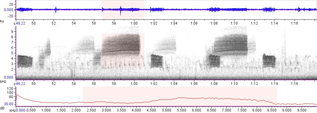 Sonogram of recording #AV 11394
