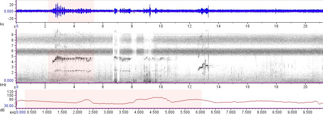 Sonogram of recording #AV 11416