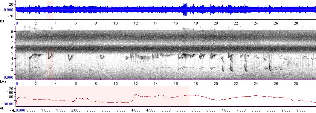 Sonogram of recording #AV 11418