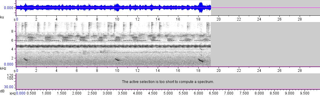 Sonogram of recording #AV 11515