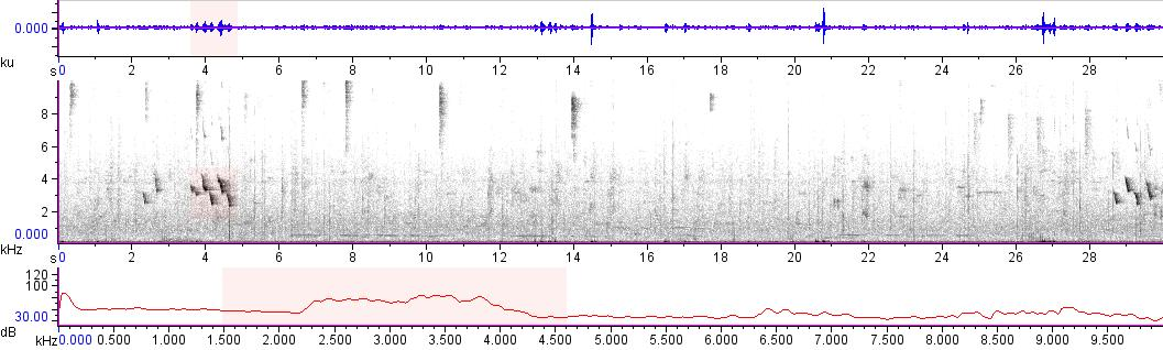 Sonogram of recording #AV 11526