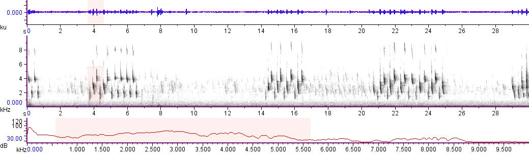 Sonogram of recording #AV 11571