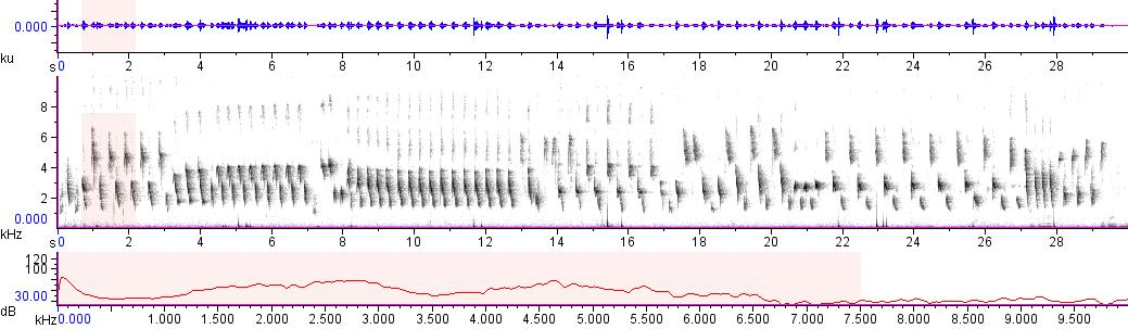 Sonogram of recording #AV 11573
