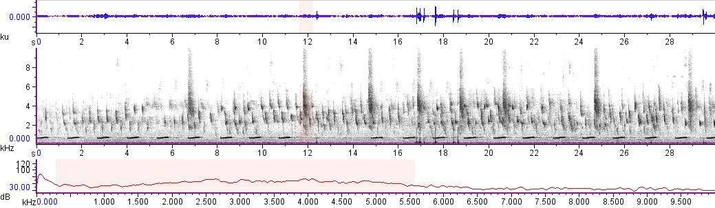 Sonogram of recording #AV 11580