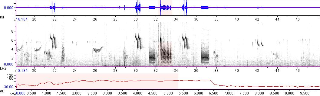 Sonogram of recording #AV 11606