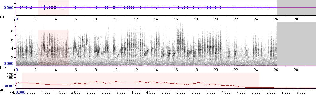 Sonogram of recording #AV 11609