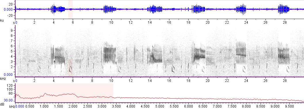 Sonogram of recording #AV 11666