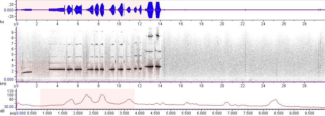 Sonogram of recording #AV 11670