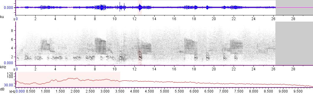 Sonogram of recording #AV 11686