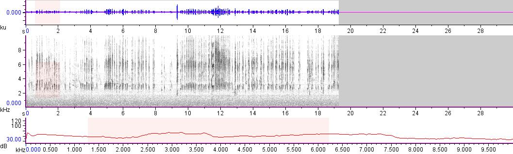 Sonogram of recording #AV 11707