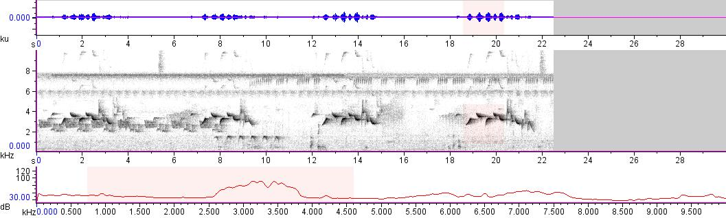 Sonogram of recording #AV 11723