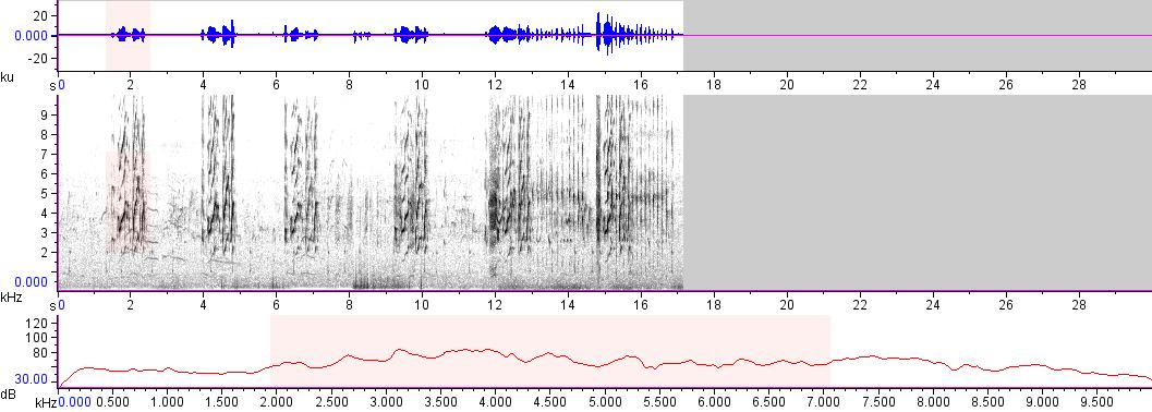 Sonogram of recording #AV 11765