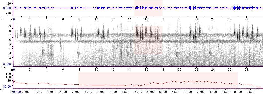 Sonogram of recording #AV 11773