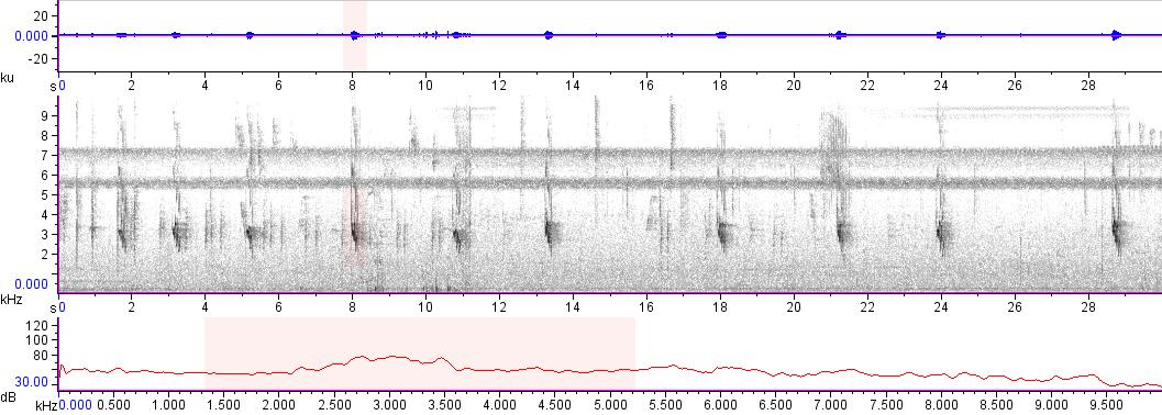 Sonogram of recording #AV 11774