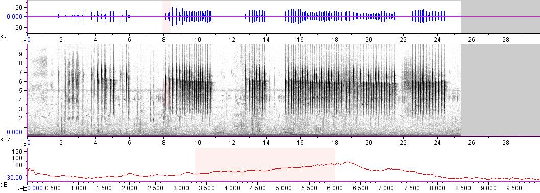 Sonogram of recording #AV 11826